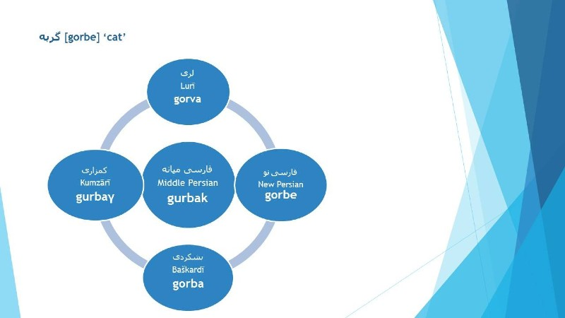 Persian GORBE (cat) in Iranian dialects