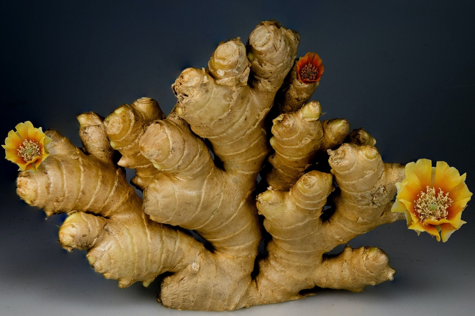 Etymology of the word ZANJABIL (ginger) in Persian
